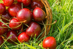 Red Cherry on Grass Stock Photography