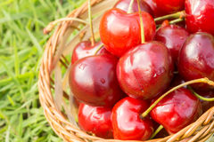 Red Cherry on Grass Stock Photo