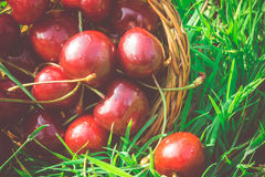 Red Cherry on Grass Retro Stock Photography