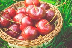 Red Cherry on Grass Retro Royalty Free Stock Photos