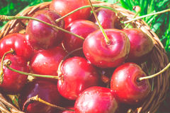 Red Cherry on Grass Retro Stock Images