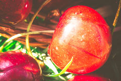 Red Cherry on Grass Retro Royalty Free Stock Images