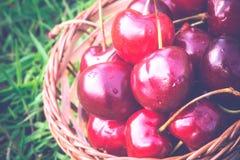 Red Cherry on Grass Retro Stock Image