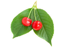 Red cherry on green leafs Stock Image