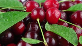 Red cherry and green leaves with water drops. Closeup stock footage