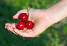 Red cherry  in a hand of child hand in summer Stock Photography