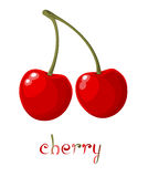 Red Cherry vector illustration