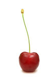 Red cherry isolated. On the white background Royalty Free Stock Image