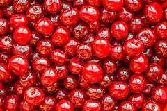 Red cherry. Stock Photography
