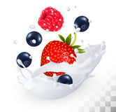 Red cherry in a milk splash on a transparent background. Stock Photo