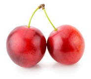 Red cherry plums isolated on the white background Stock Image