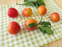 Red cherry plums Royalty Free Stock Images