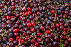 Red cherry selection Stock Photos