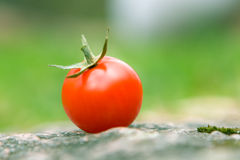 Red cherry tomate 2. The red cherry tomate on white Stock Photo