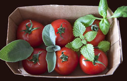 Red cherry tomatoes in a cardboard box with aromat Stock Photo