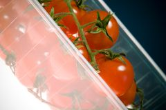 Red Cherry Tomatoes in a Container Stock Photography