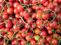 Red cherry tomatoes fill the frame Stock Photography