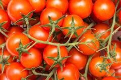 Red Cherry Tomatoes On Green Vine Stock Photography