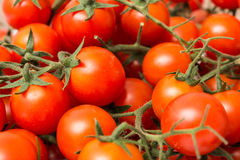 Red Cherry Tomatoes On Green Vine Stock Photos