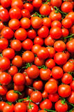 Red Cherry tomatoes in market close up, may use as background. Royalty Free Stock Images