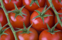 Red Cherry Tomatoes On The Vine Stock Images