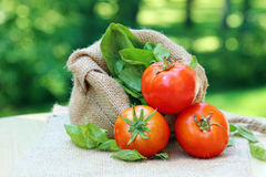 Red cherry tomatoes Stock Photography