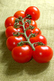 Red cherry tomatoes on the vine Royalty Free Stock Images