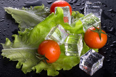Red cherry tomatos, green salad and ice cubes on black wet table Stock Images