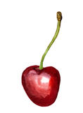 Red cherry Stock Photos