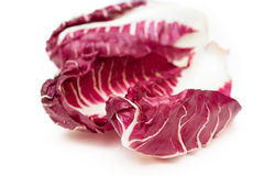 Red chicory Stock Photography