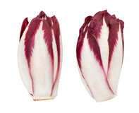 Red chicory Royalty Free Stock Image