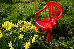 Red children chair in garden and spring narcissus royalty free stock photo