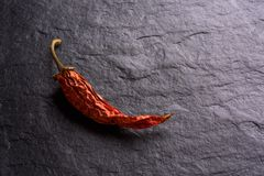Lonely Dried Red Chilli Peppers royalty free stock photography