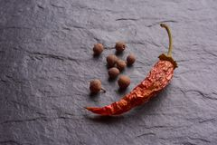 Red Chile pepperlonely dried red chilli pepper and spices royalty free stock photos