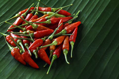 Red chile peppers Stock Photography