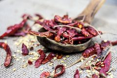 Popular Resham patta red chilli in wooden scoop. Stock Photography