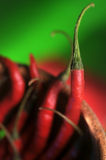 Red chili. Close up chili with green background stock photography