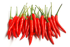 Red chili royalty free stock image