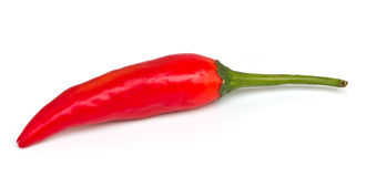 Red chili. On a white background royalty free stock photo