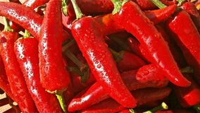 Red Chili Stock Photos