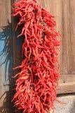 Red chili  at back yard Royalty Free Stock Image