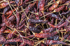 Red chili background Royalty Free Stock Photos