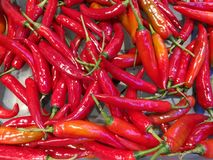 Red chili. Background, texture red chili Stock Image