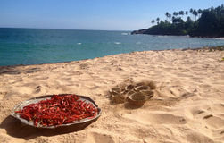 Red Chili and coconut on the beach Stock Image