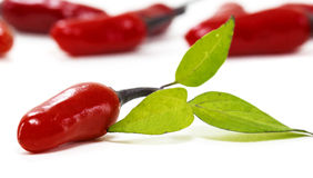 Red chili with green leaf. In white Stock Images