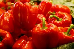 Red chili hot peppers Stock Image