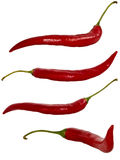 Red chili isolated. On white Stock Image