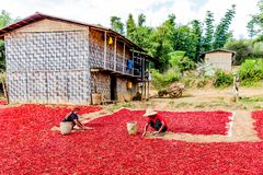 Red chili Kalaw Shan state Myanmar Royalty Free Stock Image
