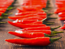 Red chili padi Royalty Free Stock Images