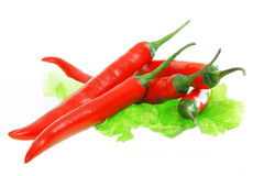 Red chili pepper. On a white background Royalty Free Stock Photos